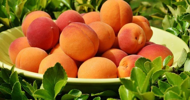 12 Manfaat aprikot untuk kesehatan, mirip dengan buah persik