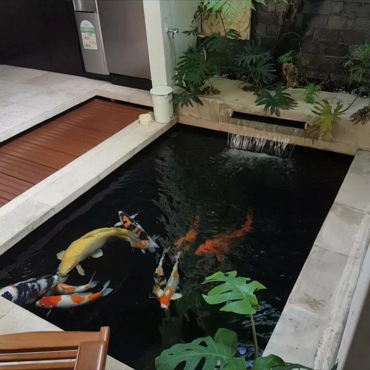 desain kolam ikan dalam ruangan instagram