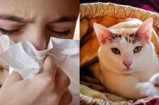 10 Cara ampuh atasi alergi debu, mudah diterapkan