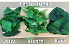 14 Manfaat daun cincau untuk kesehatan, ampuh bunuh sel tumor