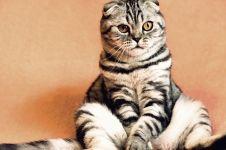 Terkuak motif pria yang makan kucing hidup-hidup