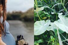 20Manfaat daun talas untuk kesehatan, menjaga keindahan kulit