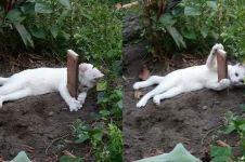 Potret kucing tak mau pergi dari makam adiknya ini bikin sedih