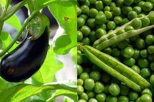 Sering dikira sayur, 10 bahan masakan ini ternyata buah