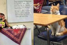11 Kelakuan lucu kucing ketika di sekolah, bikin cengar-cengir