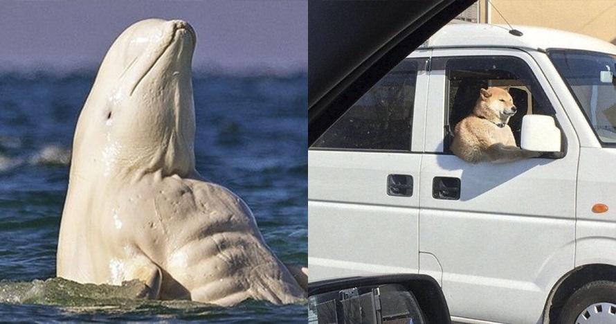 10 Ilusi foto hewan ini terlihat aneh, bikin lihat ulang