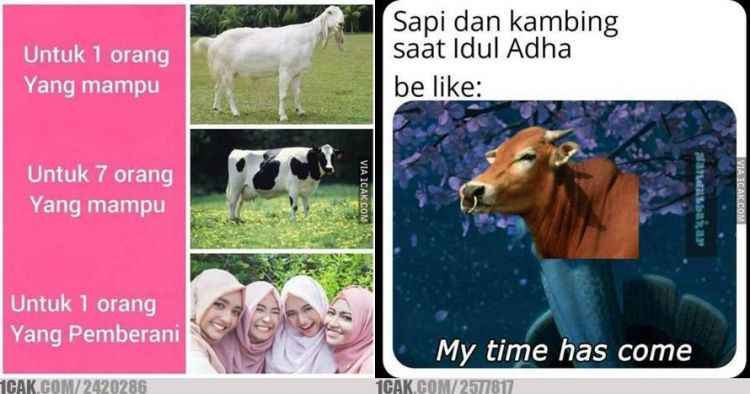 10 Meme lucu hewan kurban jelang Idul Adha ini endingnya baper