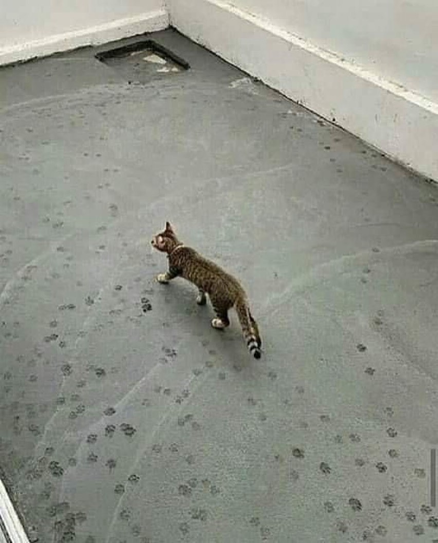 kucing bikin tepuk jidat © 2019 brilio.net