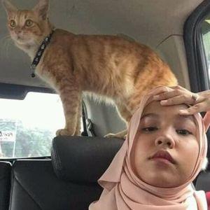 Bercanda dengan kucing oren, cewek ini alami kejadian menjijikkan