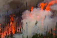 10 Potret kebakaran Hutan Amazon, terparah sepanjang sejarah