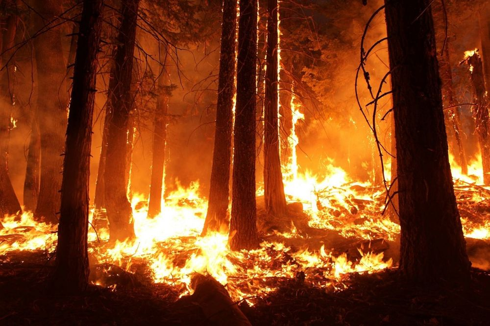 dampak kebakaran amazon_langit gelap © 2019 brilio.net