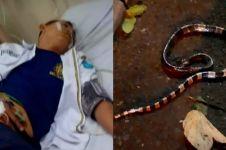 Satpam di Tangsel tewas karena gigitan ular weling, ini penjelasannya