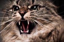 8 Aksi kucing serang manusia, mau ketawa tapi kasihan