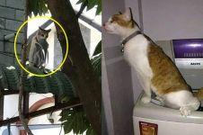 10 Tingkah nyeleneh kucing di keseharian ini bikin heran