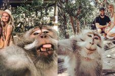 Terungkap, begini cara foto selfie dengan monyet di Bali yang viral