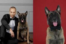 10 Momen gemas anjing 'pembunuh' milik Bima Aryo ikut pemotretan