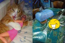 10 Tingkah lucu kucing ini kocaknya nggak kalah dari manusia