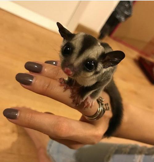 hewan peliharaan aura kasih Instagram