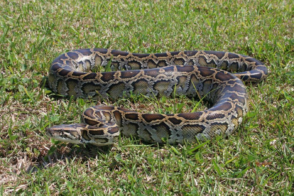 raja ular © 2019 brilio.net