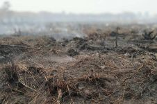 Data BNPB, ada 2.719 titik panas kebakaran hutan dan lahan