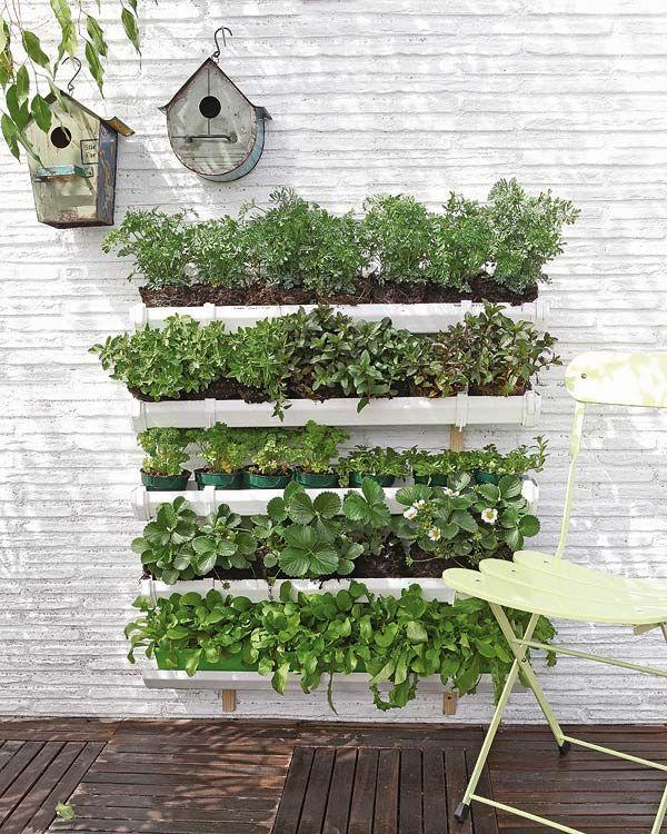Ide kreatif bikin kebun sayur di rumah istimewa