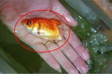Kisah wanita rawat ikan yang hampir mati, endingnya tak terduga