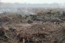 Penanganan Karhutla, Polda Riau tetapkan 53 tersangka pembakar lahan
