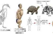 10 Ilustrasi ini gambarkan jika manusia punya kerangka hewan