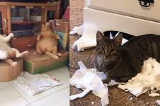 10 Tingkah lucu kucing saat merasa tak diawasi pemiliknya
