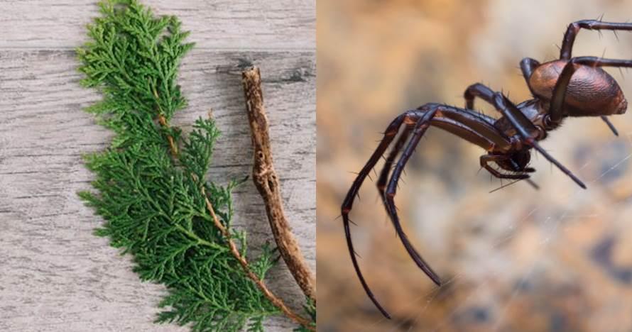 6 Cara alami mengusir serangga di rumah, aman dan simpel