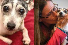 Mengharukan, anjing ini bertemu pemiliknya usai 12 tahun hilang