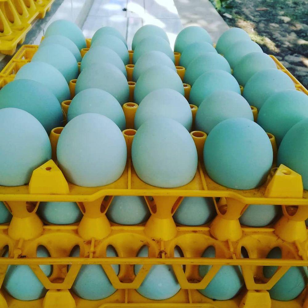 5 Cara membuat telur asin enak, gurih, dan mudah instagram