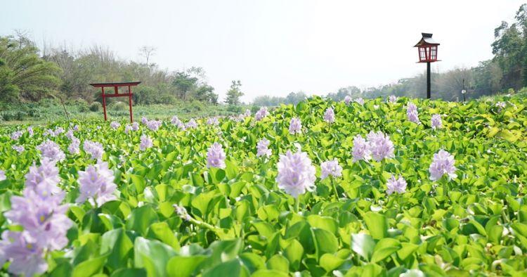 Kalinampu Natural Park, spot Instagramable tepi kali bak Jepang