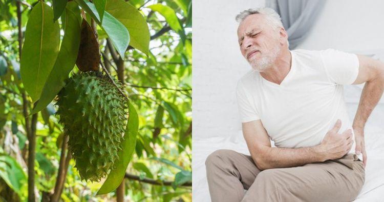 12 Manfaat Daun Sirsak Bagi Kesehatan Dan Cara Pengolahannya