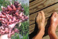 8 Manfaat jahe merah untuk kesehatan dan cara pemakaiannya
