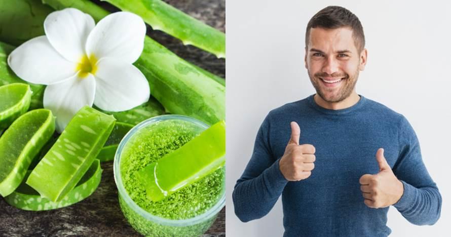 7 Manfaat lidah buaya untuk pria dan cara menggunakannya