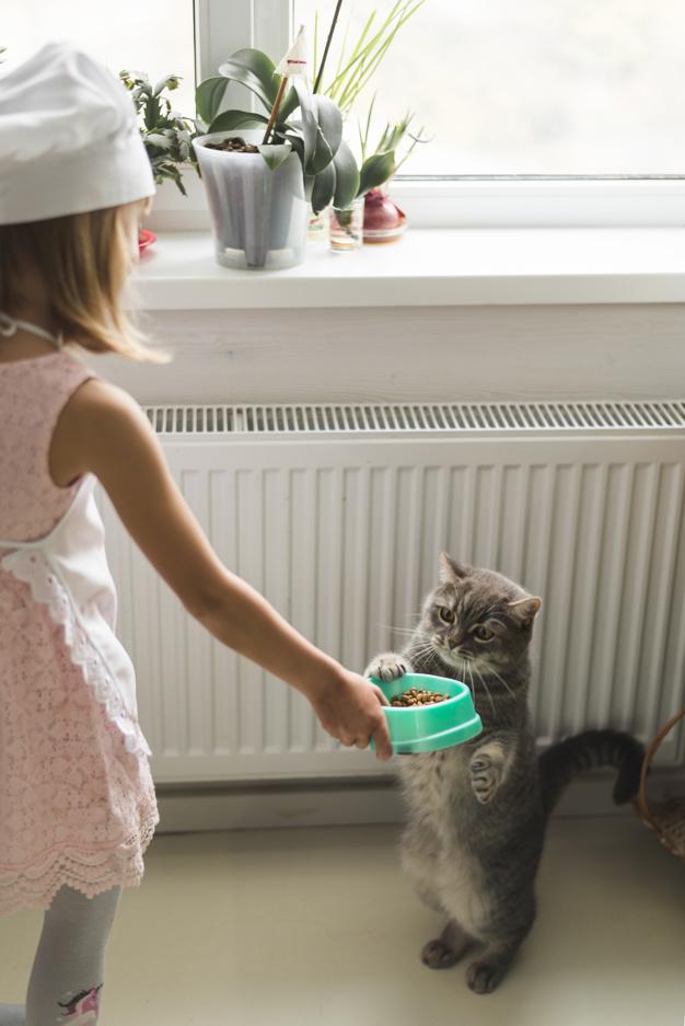 7 Penyebab diare pada kucing dan cara mengobatinya freepik.com