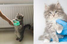 7 Penyebab diare pada kucing dan cara mengobatinya