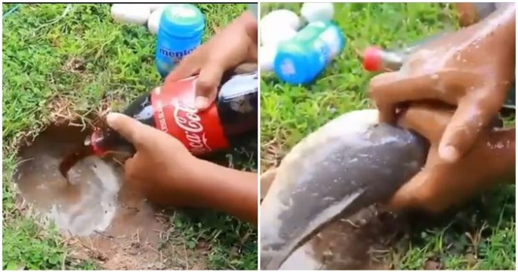 Ini penjelasan ilmiah di balik mancing lele pakai mentos & soda