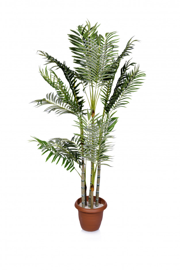tanaman hias yang mudah dirawat © 2019 freepik.com