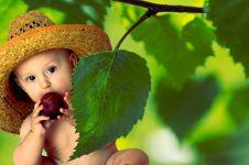 9 Manfaat buah plum untuk bayi, aman dan sehat