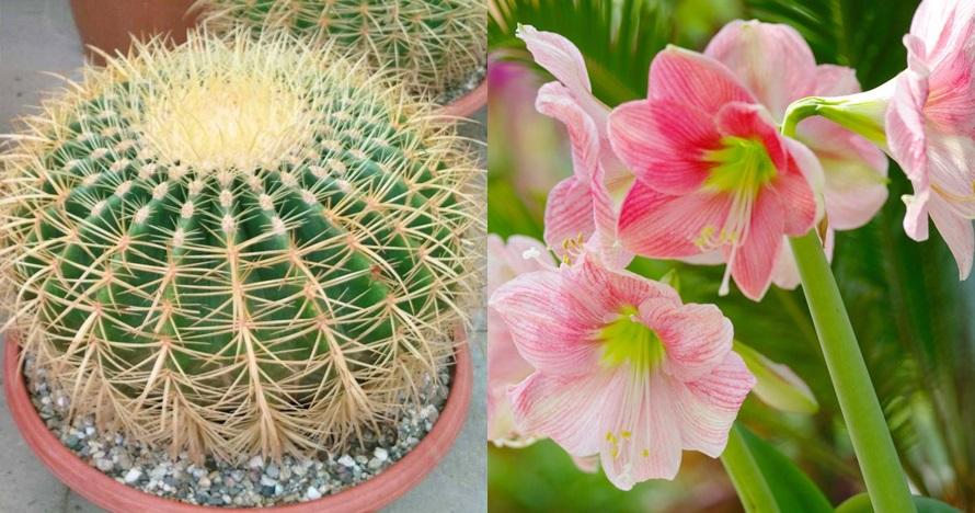 15 Jenis bunga hias untuk memperindah pekarangan rumah