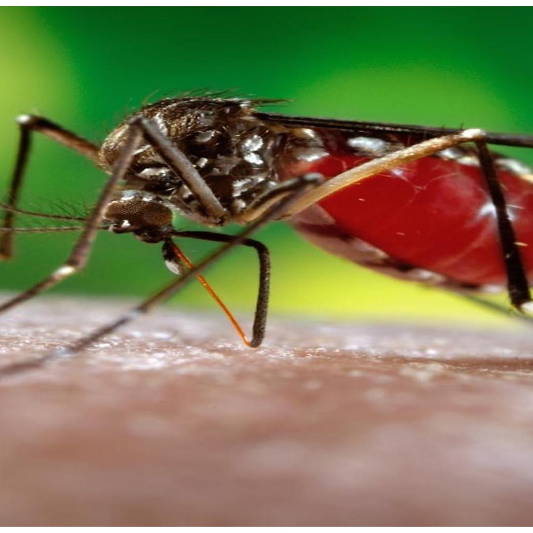 Ciri-ciri virus zika, penyebab dan cara pencegahannya