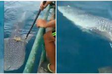 Video nelayan bantu hiu lepaskan jeratan tali, bikin haru
