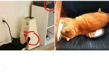 10 Tingkah usil kucing ini lucunya bikin geregetan