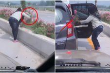 Viral detik-detik emak-emak curi bunga di jalan tol, miris!