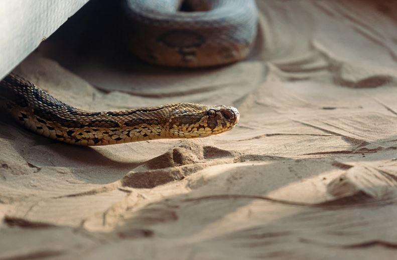 Perlu diwaspadai, ini 7 tempat persembunyian ular di rumah