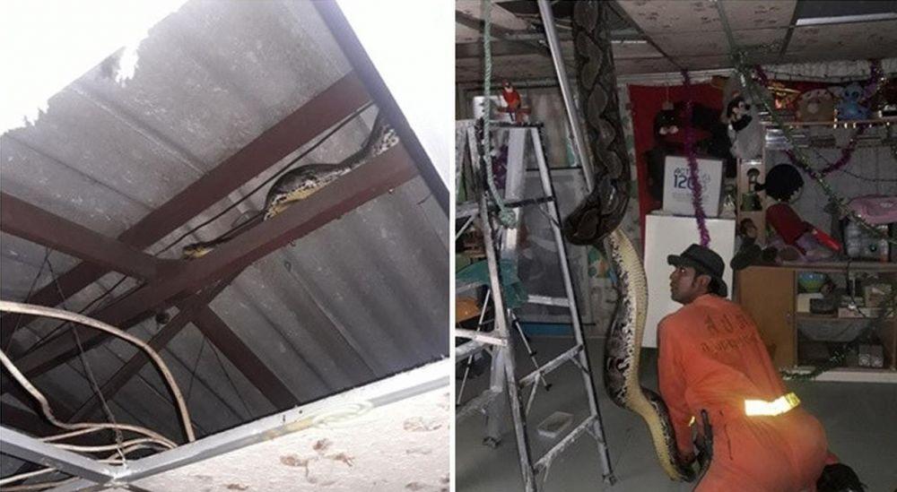 Penampakan ular di rumah tak terduga © 2019 berbagai sumber