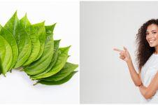35 Manfaat daun sirih buat kesehatan & kecantikan, serta penggunaannya