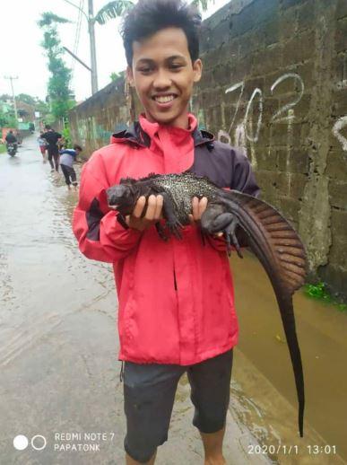 Hewan liar di tengah banjir  berbagai sumber